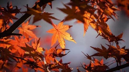 All leaves